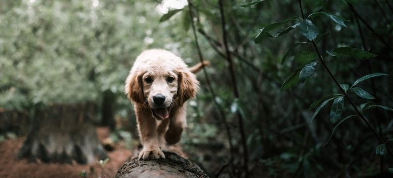 dog - help your pet adjust to a new home