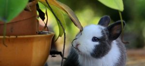 A bunny besides a potted plant